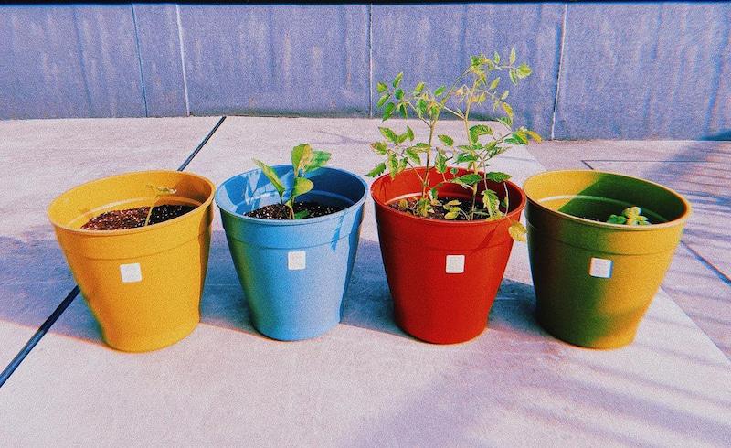 【写真】野菜を植えたカラフルなプランターが4つ並べられている。